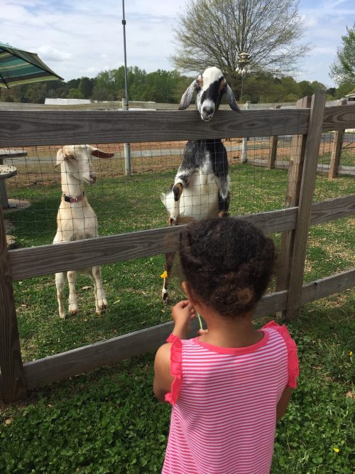 A Trip to the Farm