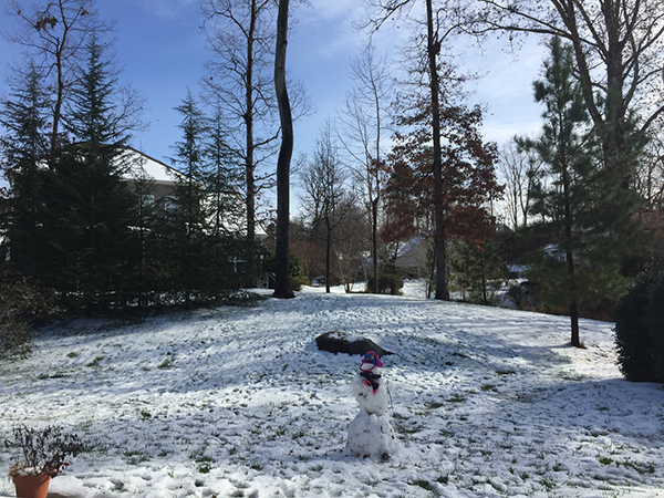 A Snowy Pause
